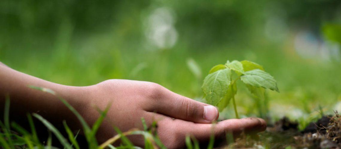 ekologia-dlaczego-jest-tak-wazna-dla-srodowiska-847x570